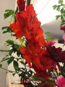 梅雨の季節を感じれる赤いお花です